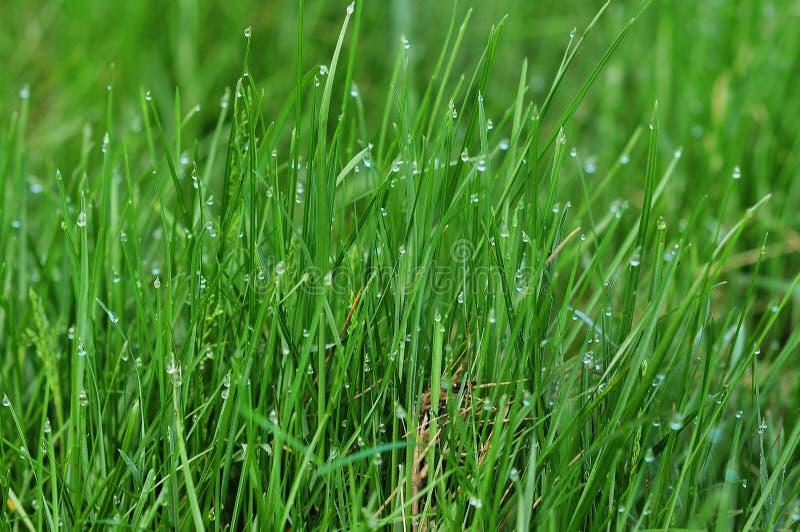 Wibrujący zielonej trawy zakończenie obrazy stock