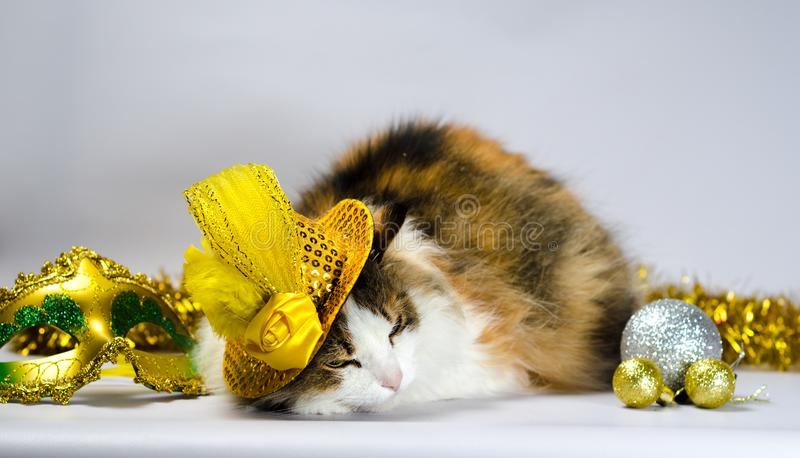 Wicked cat in a yellow carnival hat with sequins and a feather n. Wicked cat in a yellow carnival hat with sequins bow and a feather next to a mask and Christmas stock image