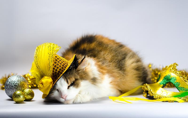 Wicked cat in a yellow carnival hat with sequins and a feather n. Wicked cat in a yellow carnival hat with sequins bow and a feather next to a mask and Christmas stock photo