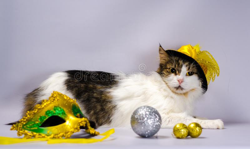 Wicked cat in a yellow carnival hat with sequins and a feather n. Wicked cat in a yellow carnival hat with sequins bow and a feather next to a mask and Christmas royalty free stock photos