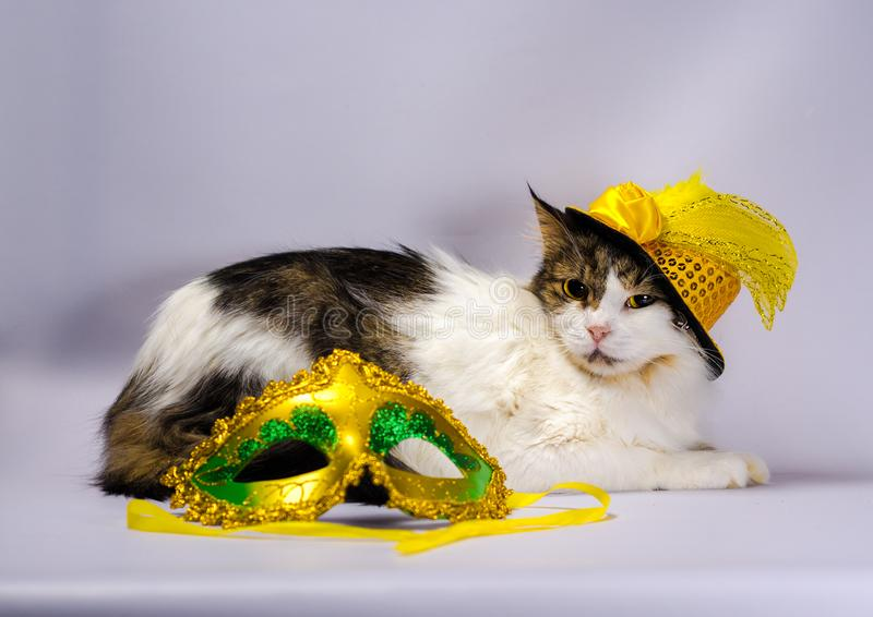 Wicked cat in a yellow carnival hat with sequins and a feather n. Wicked cat in a yellow carnival hat with sequins bow and a feather next to a mask and Christmas royalty free stock photography