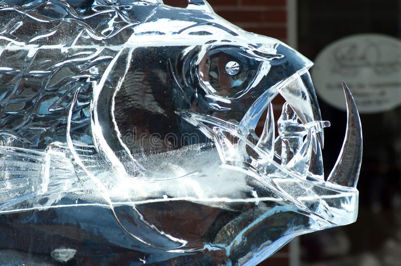 Wicked fish ice sculpture. A wicked mean looking fish is on display out side a store, carved from a block of ice during a ice carving demonstration royalty free stock images