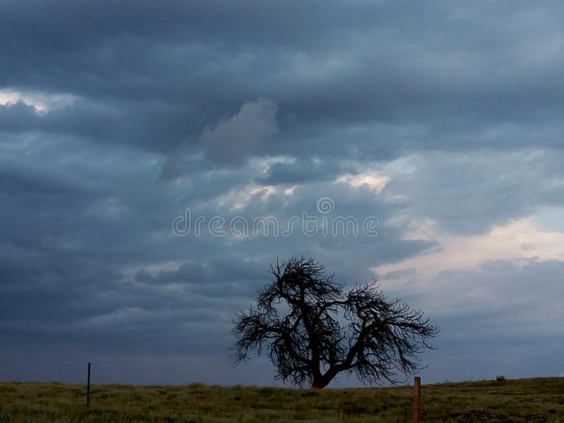 Wicked Tree stock image