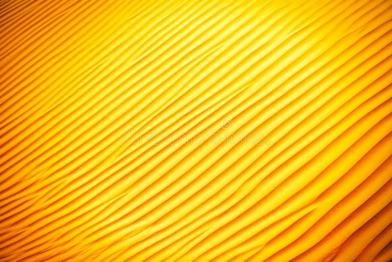 Wickeln Sie geschaffene Muster in den Sanddünen von Liwa-Oase, Vereinigte Arabische Emirate lizenzfreie stockfotos