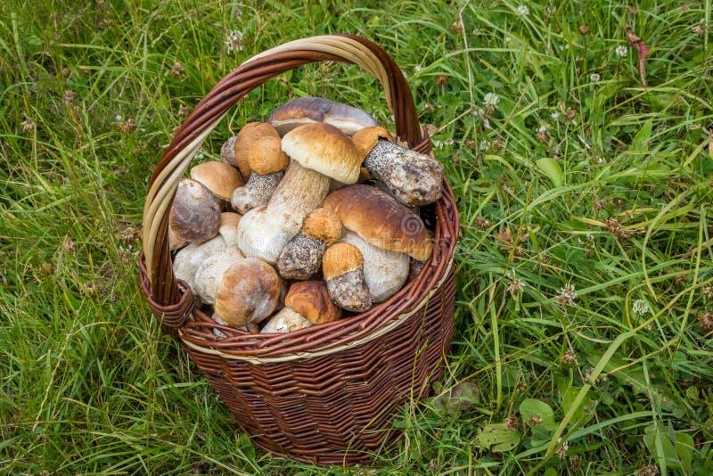 Wicker basket with edible mushrooms stock photos