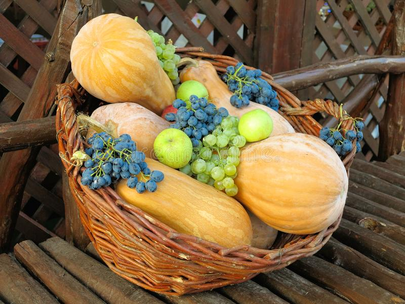 Wicker basket filled with colorful organic vegetables fresh harvest pumpkin, grapes, apples stock photos