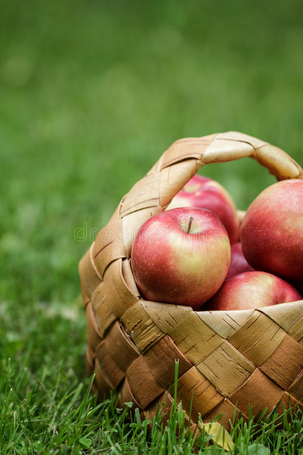 Wicker basket full of gala apples. On fresh grass stock image