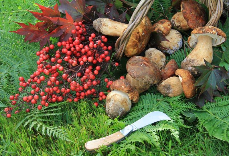 Wicker Basket Full Of Mushrooms Royalty Free Stock Photos