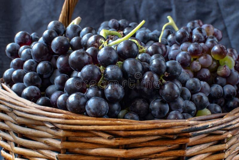 Wicker basket full of Tempranillo grapes royalty free stock photos