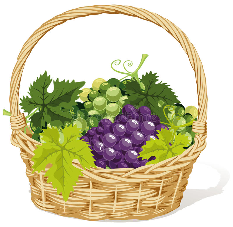 Wicker basket of grapes royalty free illustration