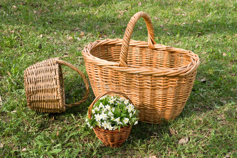 Wicker basket on the grass. Three wicker baskets with yellow flowers on the green grass stock photography