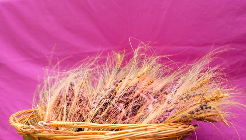 Wicker basket with lavender and dried wheat on violet background stock photos
