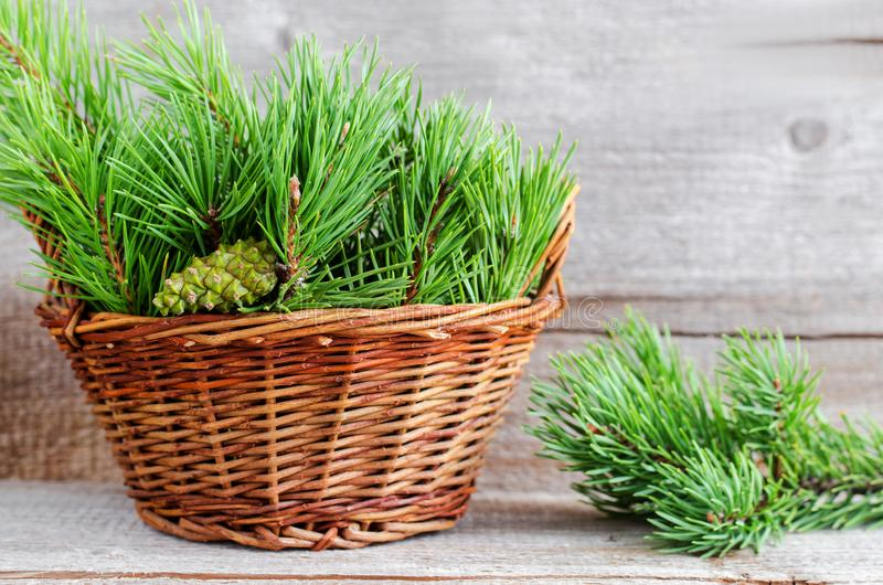 Wicker basket with pine branches and cone. Winter home decoration. Alternative medicine and herbal remedy concept. Selective focus. Copy space stock image