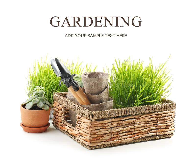 Wicker basket with plants, pots and gardening tools on white background royalty free stock image