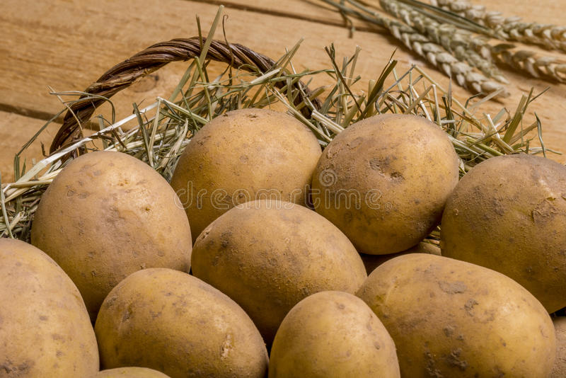 Wicker basket with potatoes. Wicker basket nest with sandy potatoes and ears of wheat on wooden board stock photo
