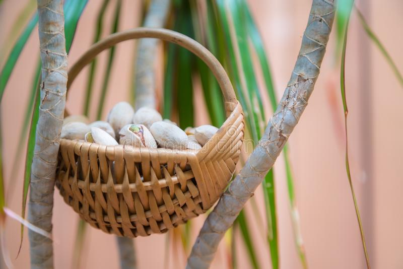 Wicker basket with salty, crunchy pistachio nuts between green plant brunches.  stock images