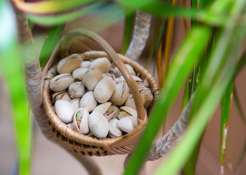 Wicker basket with salty, crunchy pistachio nuts between green plant brunches.  royalty free stock photos