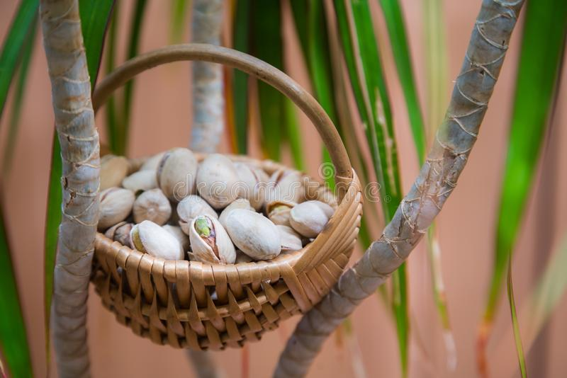 Wicker basket with salty, crunchy pistachio nuts between green plant brunches.  stock photography