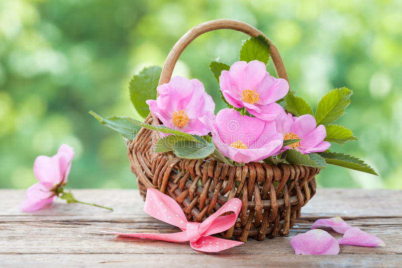 Wicker basket with wild rose flowers. Wedding or birthday decoration. royalty free stock images