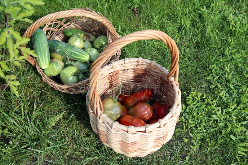 Wicker baskets with cucumbers and tomatoes stock photo