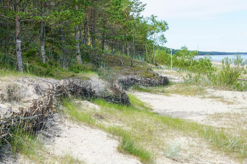 Wicker fences on the beach for the detention of sand movement and the reduction of man made effects stock photography