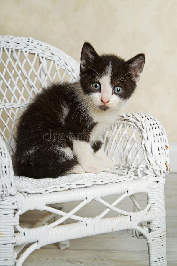 Download Wicker Kitty stock image. Image of antique, spotted, white - 20830787
