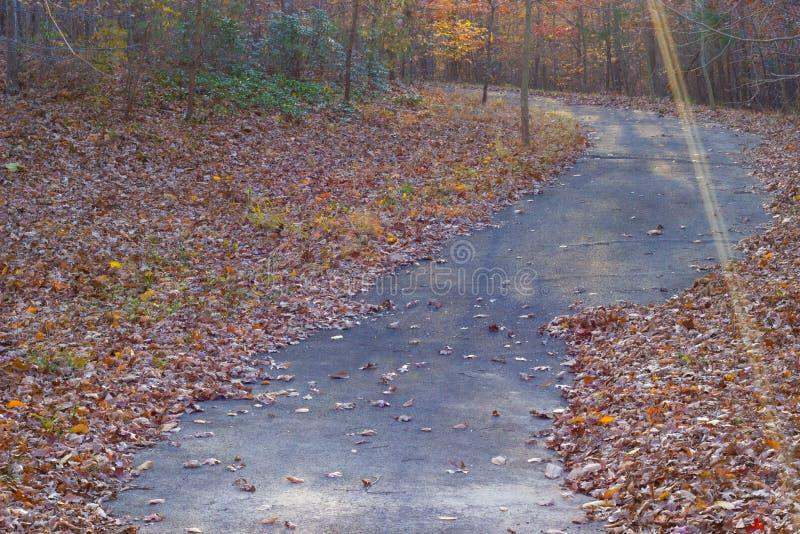 Wicklungswaldweg bedeckt in den Blättern des Falles stockbilder