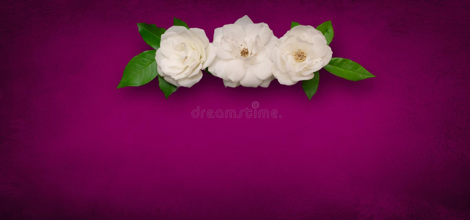Wide Angle Flower background with white roses stock photography