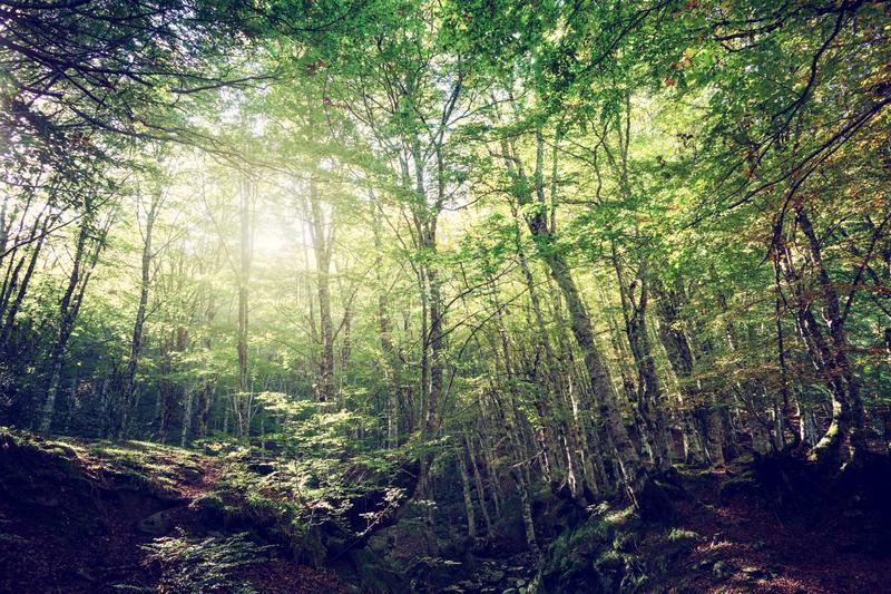 Wide angle of a green forest with sun light. Wide angle of a peaceful green forest with sun light stock image