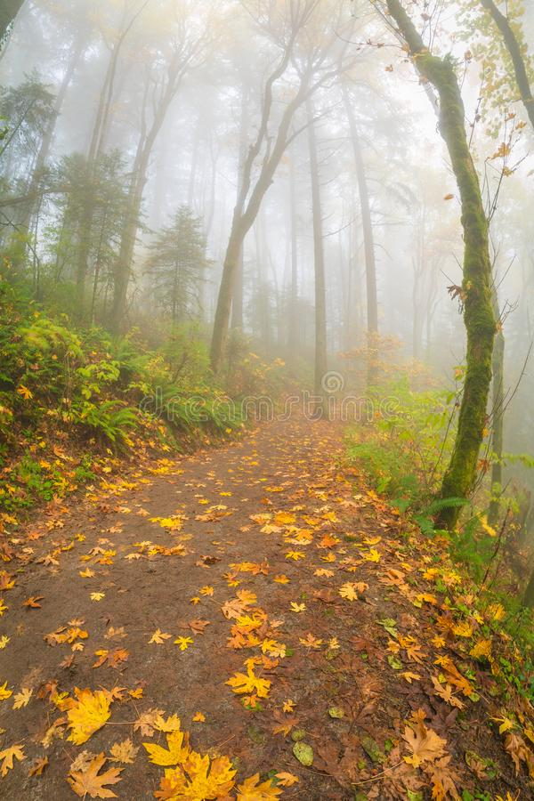 Wide angle view of the foggy forest. This is a wide angle view of the foggy forest stock photo