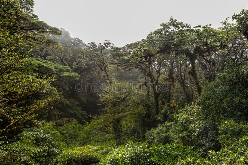 Wide angle view of the jungle from a canopy bridge. With dense fog in the distance stock image