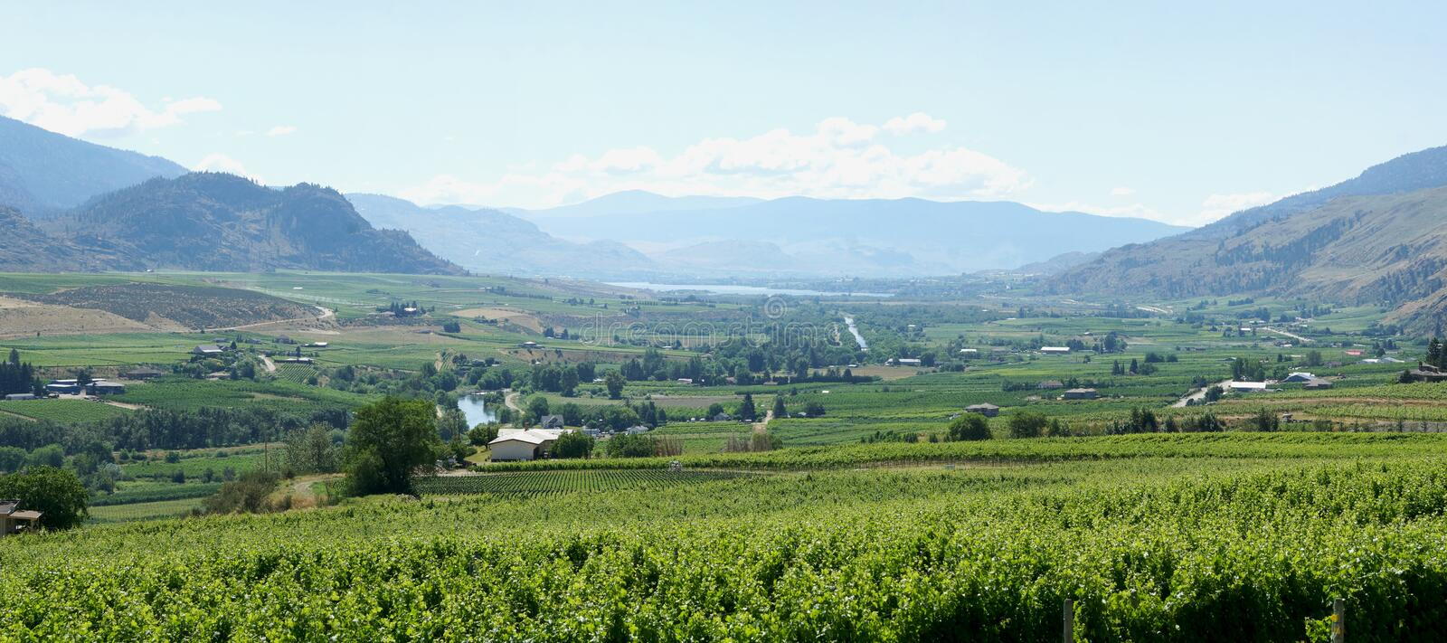 Beautiful Panoramic View Of The Golden Mile Bench in Oliver, British Columbia. A wide angle view taken from the Checkmate vineyard tasting room in Oliver, BC stock photography