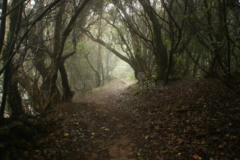 Wide dirt path into the forest stock images