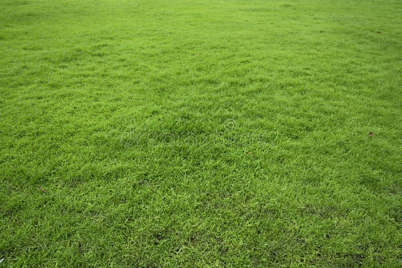 Wide green field of grass. stock image