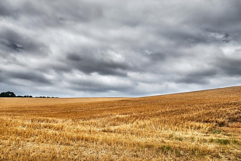 Wide open harvested wheat field underneath a grey, overcast sky. Before the rain starts to fall stock photo