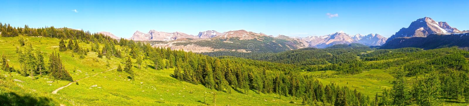 Healy Pass Meadows Summertime Hiking Banff National Park Canadian Rockies. Wide Panoramic Landscape of Healy Pass Meadows on a great summertime hiking trail in stock photo