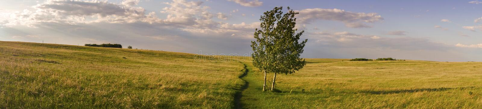 Wide Panoramic Landscape and Isolated Tree Nose Hill Park Prairie Grass Alberta Foothills stock images