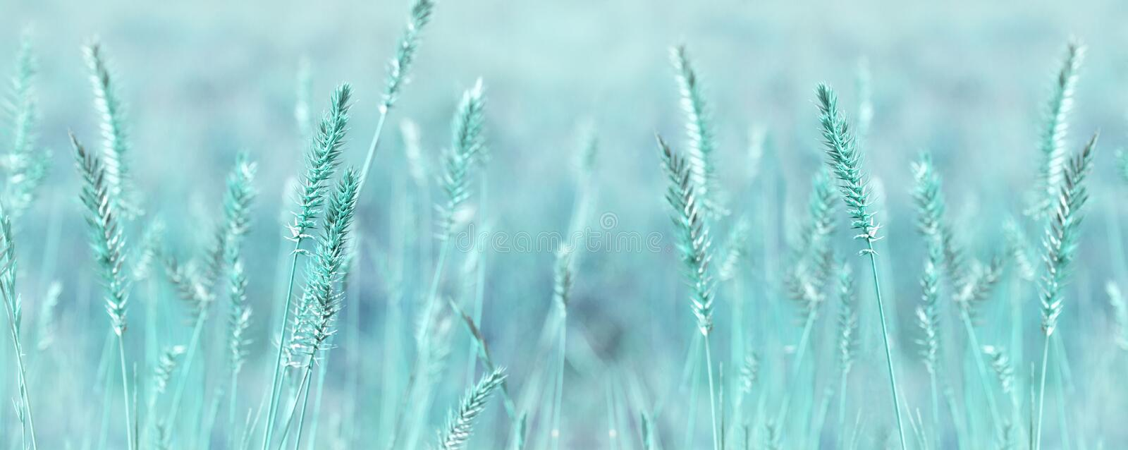 Wide panoramic natural background in pastel colors. Wild grass field panorama. Nature outdoor widescreen wallpapers. Wide panoramic natural background in pastel royalty free stock image