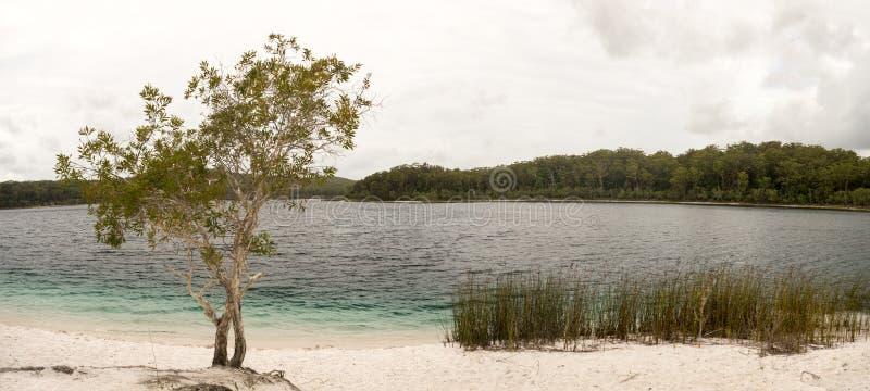 Lake McKenzie Fraser Island Australia Panorama stock image