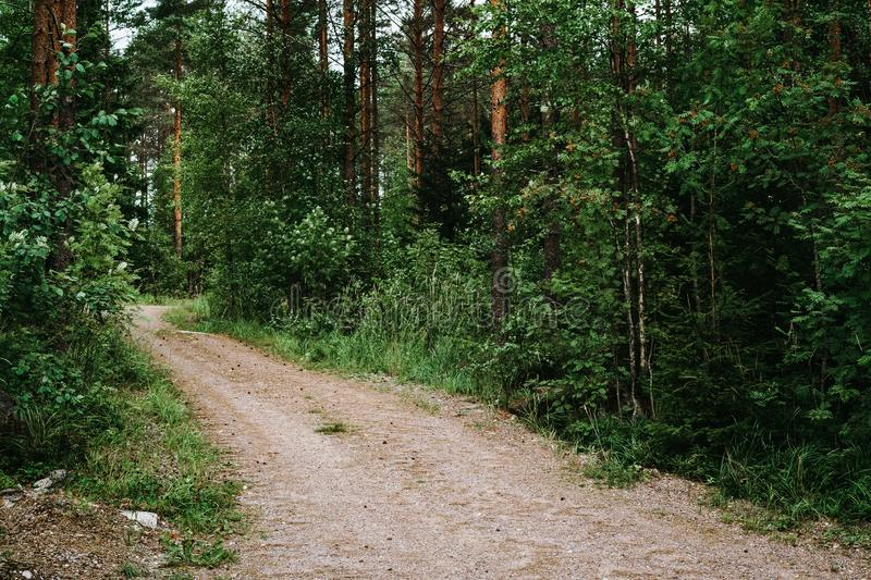 Trail in a pine forest. Wide path in a green pine forest stock images