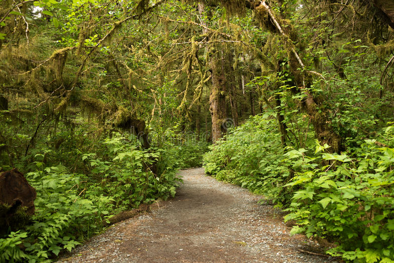 Wide path leading into rainforest in Tongass National Forest, Alaska royalty free stock photo