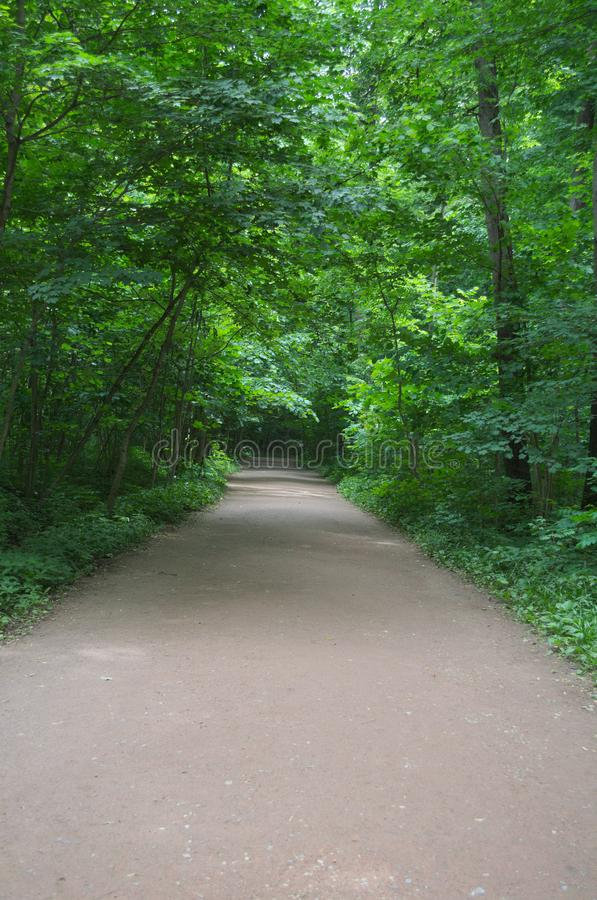 Wide paved path in the forest royalty free stock photos