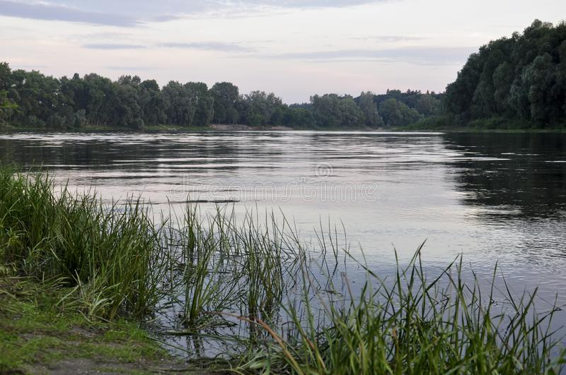 Wide river flowing across green forest. Summer evening. Reflections of trees and grass in the calm flowing water.  royalty free stock photos