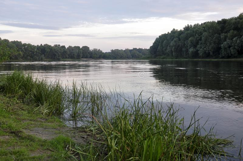 Wide river flowing across green forest. Summer evening. Reflections of trees and grass in the calm flowing water.  royalty free stock image