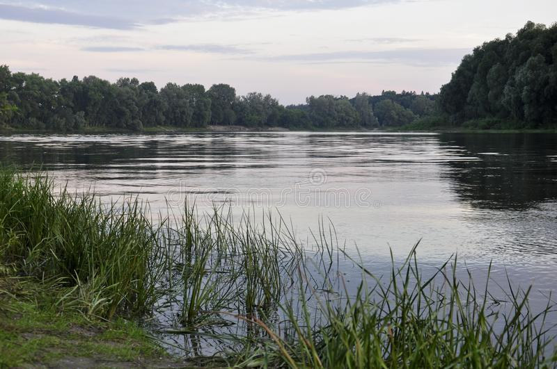 Wide river flowing across green forest. Summer evening. Reflections of trees and grass in the calm flowing water.  royalty free stock photography