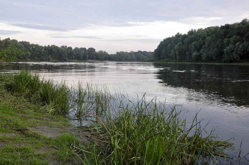 Wide river flowing across green forest. Summer evening. Reflections of trees and grass in the calm flowing water.  royalty free stock images