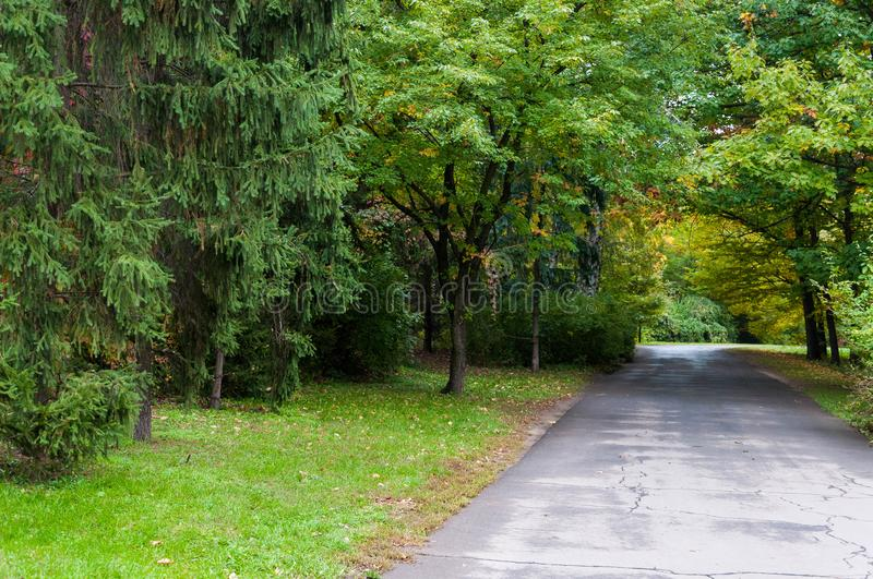 Wide road trough green and yellow tree tunnel royalty free stock photo