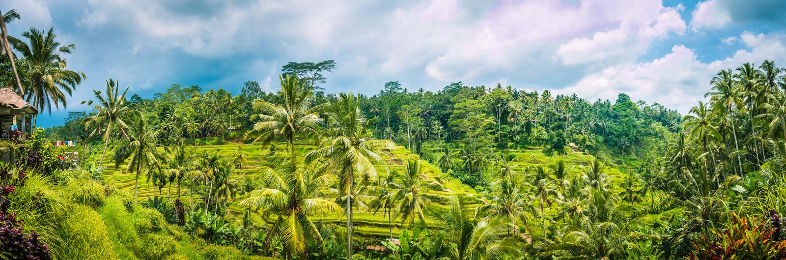Wide shot of amazing Tegalalang Rice Terrace field covered with coconut palm trees and cloudy sky, Ubud, Bali, Indonesia.  royalty free stock photos