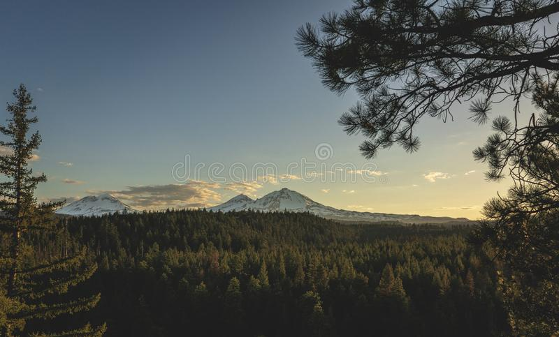 Wide shot of a forest of green pine trees near white mountains under a blue sky. A wide shot of a forest of green pine trees near white mountains under a blue royalty free stock photography