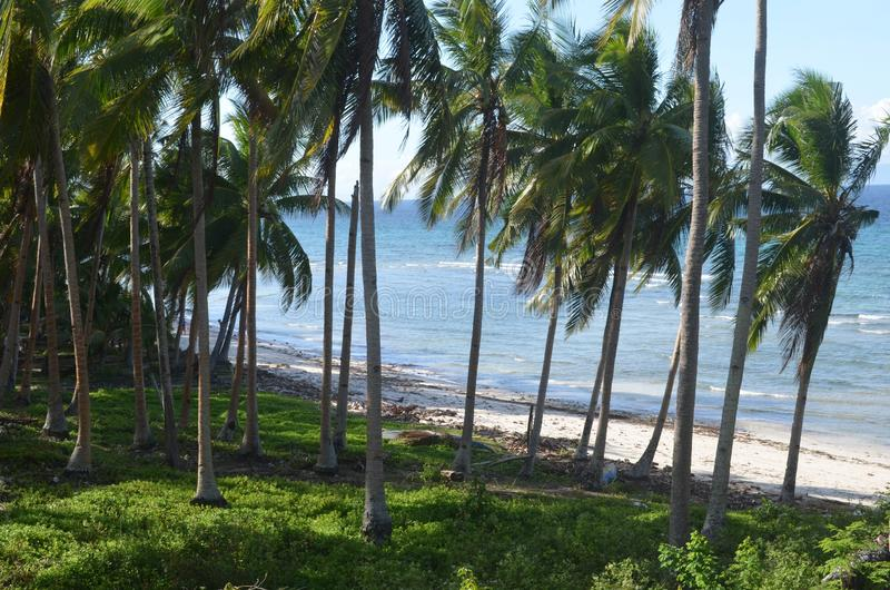 Wide shot of tropical palm trees on grass by the sea during daytime. A wide shot of tropical palm trees on grass by the sea during daytime stock photos